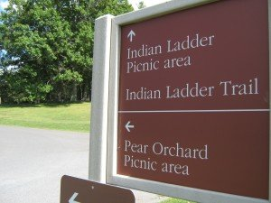 Thacher Park's Pear Orchard