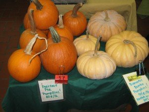 The Berry Farm's creamy colored rombo pumpkins for sale at Troy Farmers Market