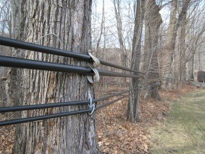 Modern tubing to collect sap in Sweet Brook Farm's sugar bush in the Berkshires