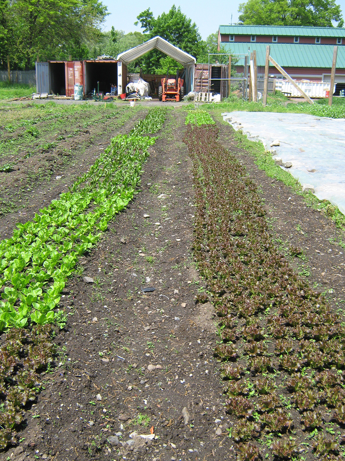 A 2.5 Acre Heritage Farm Grows In NYC: Producing 45 Tons of Produce In Past 6 Seasons & Growing Community Spirit