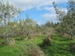 """Community Orcharding"" Network Helps Guide Consumers to Organic & Local Apples"